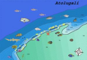 atolugali